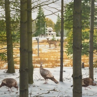 Wild Turkeys by D.P. Brown