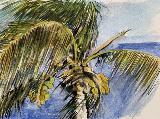 Study for Coconut Palm by Philip Craig