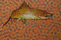 Trout Painting  #021-1884 by Les Thomas